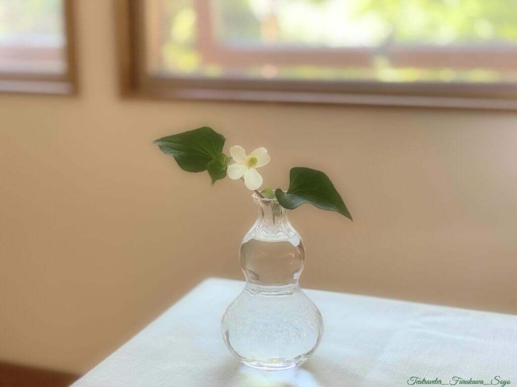 お花のある暮らし ドグダミ