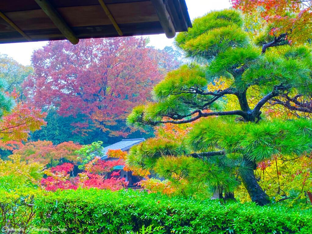 根津美術館 庭園 紅葉