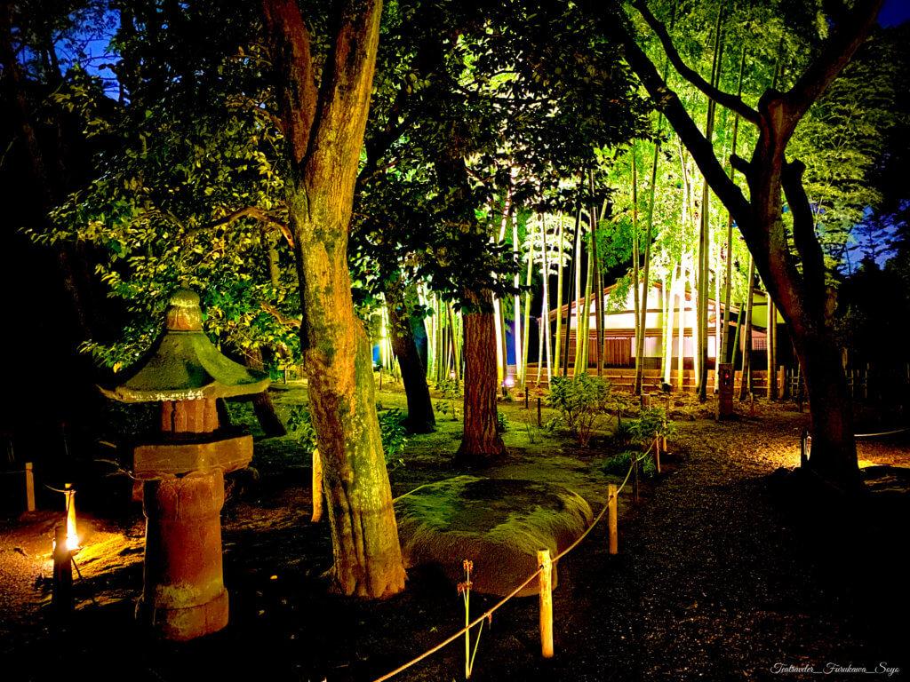 横浜 三渓園 ライトアップ